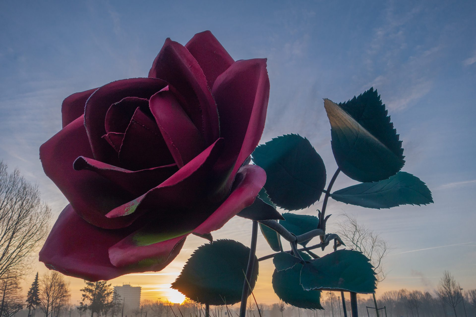 A Rose of Steel was taken by António Valente